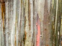 五颜六色皮肤木地球口气垂直线 库存图片