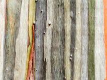 五颜六色皮肤木地球口气垂直线 免版税库存图片