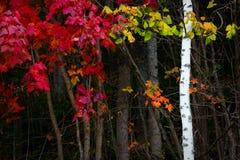 五颜六色秋天森林叶子明亮的五颜六色的水平的背景秋天森林的叶子 免版税库存照片