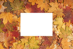 五颜六色秋天的背景 库存照片