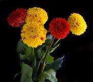 五颜六色秋天的菊花 库存照片