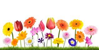 五颜六色花卉生长在白色隔绝的草 库存照片
