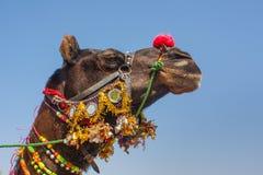 五颜六色装饰的骆驼 库存照片