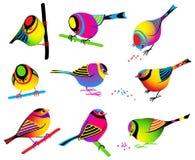 五颜六色鸟的收藏 库存图片