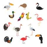 五颜六色鸟集合的动画片 库存例证