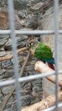 五颜六色鹦鹉的鸟 库存照片