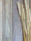 五颜六色麦子或水稻,象美丽的花在木背景 免版税库存照片
