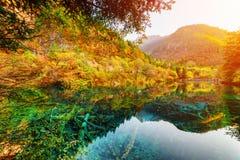 五Flower湖的美妙的看法在风景秋天森林中的 库存照片
