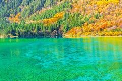 五Flower湖鸟瞰图秋天日出时间的 免版税库存图片