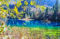 五Flower湖,九寨沟,在四川北部,中国 库存照片