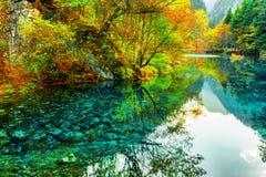 五Flower湖 在水反映的五颜六色的秋天森林 免版税图库摄影