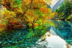 五Flower湖 在水反映的五颜六色的秋天森林 免版税库存图片