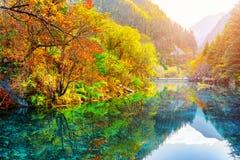 五Flower湖 在水反映的秋天森林 免版税库存照片