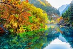 五Flower湖 秋天森林被反射的水 库存照片