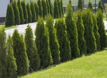 井维护了有小石头、树篱和绿色草坪道路的规则式园林  免版税库存图片
