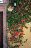 亚伦得・ de guanajuato墨西哥米格尔・圣街道 免版税库存照片