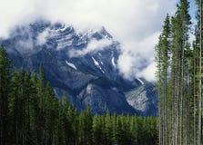 亚伯大banff加拿大级联有薄雾的山场面 图库摄影