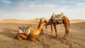 亚兹德,伊朗- 2018年4月25日:在两头骆驼旁边的地方伊朗人在亚兹德,伊朗 库存照片