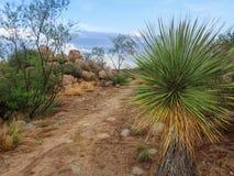 亚利桑那与植物和冰砾的沙漠足迹 免版税库存图片