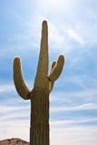 亚利桑那仙人掌沙漠 免版税图库摄影