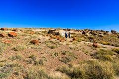 亚利桑那化石森林 免版税库存图片