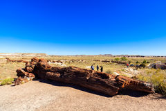 亚利桑那化石森林 库存照片