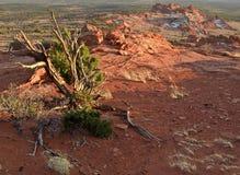 亚利桑那北原野 图库摄影