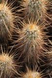 亚利桑那户外沙漠远足在12月 免版税库存照片