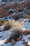 亚利桑那沙漠冬天 图库摄影