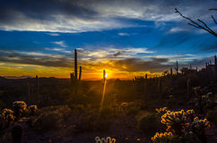 亚利桑那沙漠日落 免版税库存照片