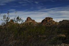 亚利桑那沙漠春天1 库存图片