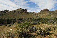 亚利桑那沙漠春天9 免版税库存图片