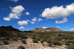 亚利桑那沙漠春天15 免版税库存图片
