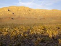 亚利桑那沙漠植物群 免版税图库摄影