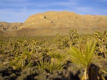 亚利桑那沙漠植物群 库存图片