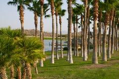 亚利桑那沙漠绿洲 免版税库存图片