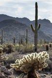 亚利桑那沙漠风景 库存照片