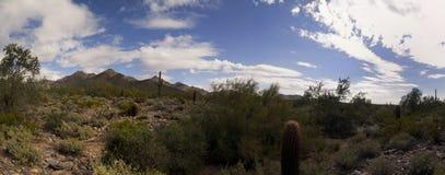 亚利桑那沙漠仙人掌和山 免版税库存照片