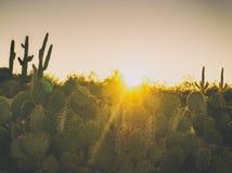 亚利桑那沙漠仙人掌树风景 免版税图库摄影