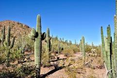 亚利桑那沙漠 库存照片