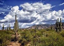 亚利桑那沙漠 免版税库存图片