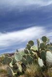 亚利桑那沙漠 库存图片