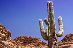 亚利桑那沙漠 免版税库存照片