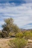 亚利桑那沙漠sonoran 库存图片