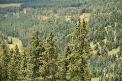 从亚利桑那的山风景 免版税库存图片