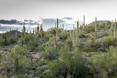 亚利桑那的沙漠风景的不同的秀丽 免版税库存照片