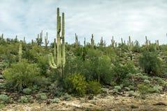 亚利桑那的沙漠风景的不同的秀丽 库存照片