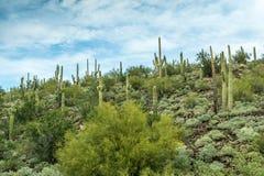 亚利桑那的沙漠风景的不同的秀丽 库存图片