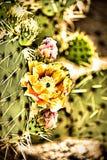 亚利桑那的黄色沙漠花 库存照片