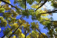 亚利桑那颜色秋天 免版税库存图片